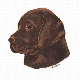 Chocolate Labrador Puppy Portrait
